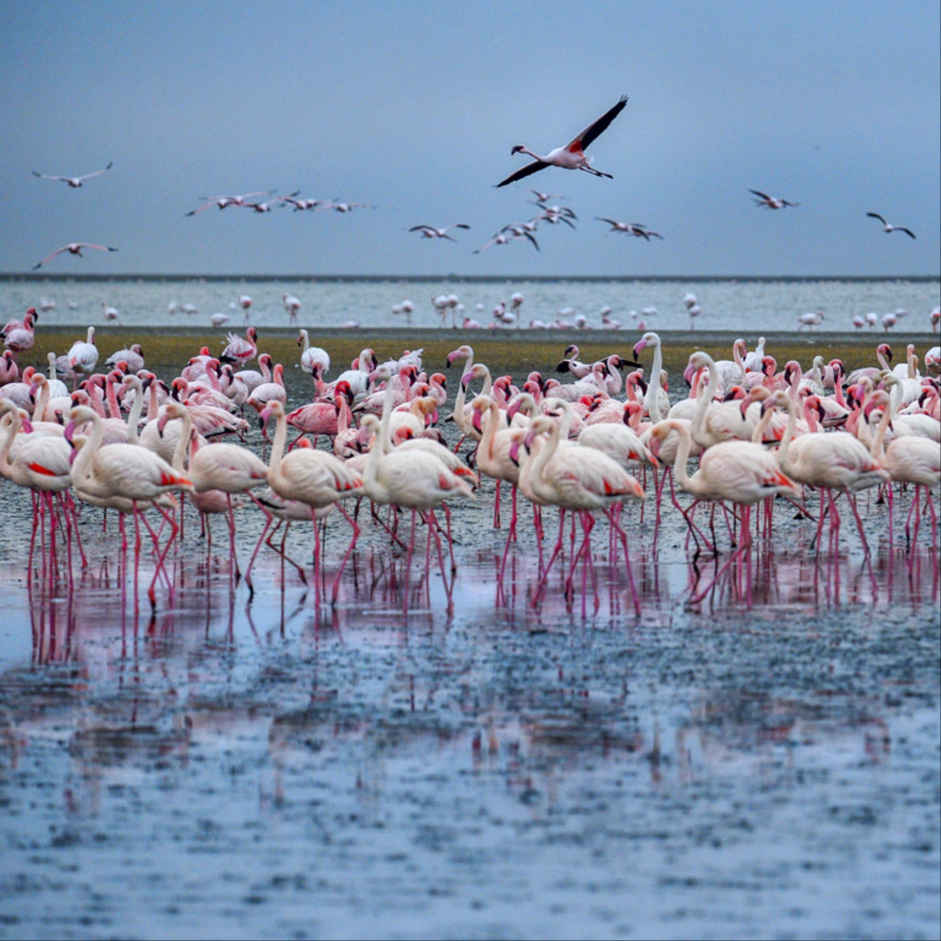 CPC Gold Medal - Lin Zhang (China)  Flamingoes