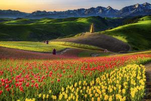 PSA HM Ribbons - Li Sun (China) <br /> Flower Sea