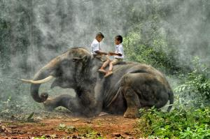 CPC Gold Medal - Lee Eng Tan (Singapore)  Brothers On Elephant