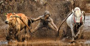 CPC Bronze Medal - Lee Eng Tan (Singapore)  Pull Cow Muddy