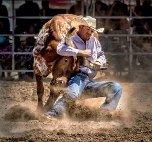 CPC Gold Medal - Graeme Watson (Australia) <br /> Steer Wrestling 1