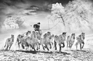 PhotoVivo Bronze Medal - Arnaldo Paulo Che (Hong Kong) <br /> Horse Looping 3