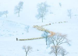 PSA HM Ribbons - Zhizhou Jiang (China) <br /> Winter Grazing