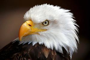 CPC Silver Medal - Albert Peer (Austria)  American Eagle