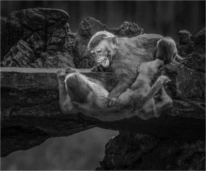 PhotoVivo Honor Mention - Yi Wan (China)  Monkey 108