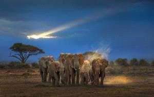 CPC Merit Award - Weidong Zhong (China) <br /> Elephant Family