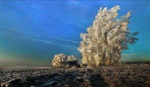 IUP Honor Mention - Daniel Lybaert (Netherlands)  Winter In Zeeland