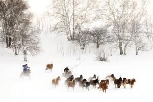 CPC Merit Award - Guoqun Wu (China) <br /> Herd Horses