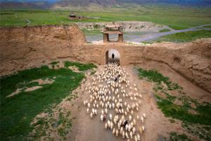 IUP Gold Medal - Jixian Shi (China) <br /> Pastoral Beyond The Great Wall