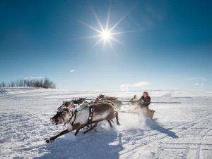 CPC Bronze Medal - Alexey Suloev (Russian Federation)  Racing On The Reindeer-Yamal