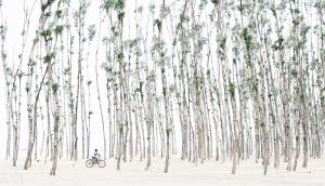 CPC Silver Medal - Jiazi Liu (China)  Thick Forest