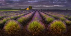 PhotoVivo Honor Mention - Yury Pustovoy (Russian Federation)  Provence