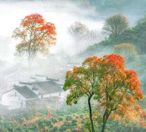 PSA HM Ribbons - Qian Lou (China) <br /> Mountain Fog