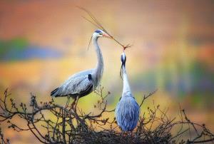 PhotoVivo Silver Medal - Lijun Shi (China)  Cranes