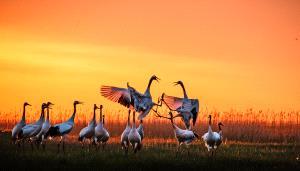 PSA HM Ribbons - Muhong Xing (China) <br /> Wings