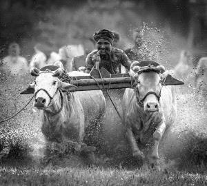 CPC Merit Award - Shourjendra Datta (India) <br /> Cow Run 1