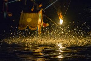 CPC Merit Award - Lilo Chen (Taiwan) <br /> Bonfire Fishing