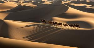 CPC Merit Award - Yun Lin (China) <br /> The Camel Shadow Of The Desert