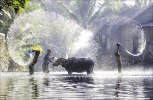 APAS Honor Mention - Phillip Kwan (Canada) <br /> Water Buffalo In Water