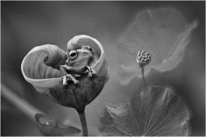 APU Gold Medal - Lee Eng Tan (Singapore) <br /> From The Lotus Bw