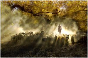 APAS Gold Medal - Thomas Lang (USA) <br /> Herding Light