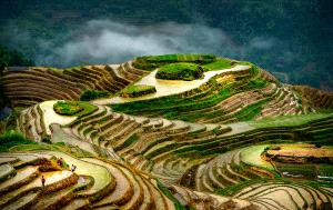 PhotoVivo Gold Medal - Thinh Nguyen (USA)  Terraced Field