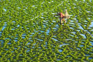 PhotoVivo Gold Medal - Zaw Min (Myanmar) <br /> Beauty Land And Fisherman