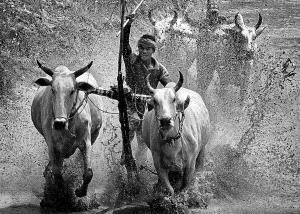 APU Honor Mention e-certificate - Huu Hung Truong (Vietnam) <br /> 2- Racing Cow