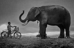 PhotoVivo Honor Mention - Pat Choo (Singapore) <br /> Boy Vs Elephant